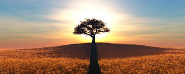 Fototapeta samotne drzewo i zachód słońca