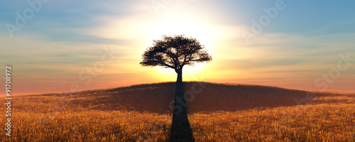 Tuinposter Zwavel geel sunset and tree