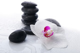 Fototapeta Kamienie - White Orchid and spa stones on a white background
