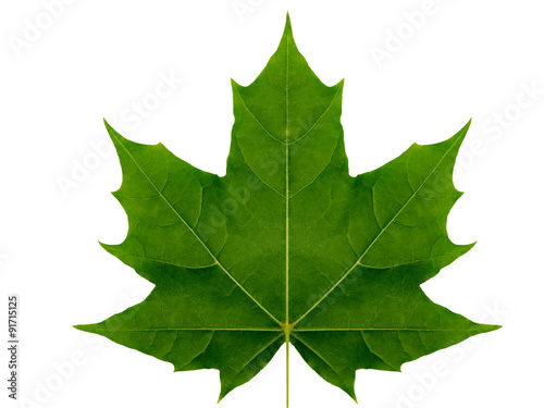 Fotografie, Obraz  Autumn leaf  maple  on a white background isolated with clipping path