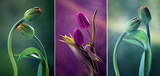 Fototapeta Tulipany - Tulipany kolor mix