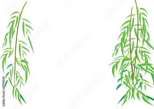 Slika na platnu Willow tree branchs Vector illustration