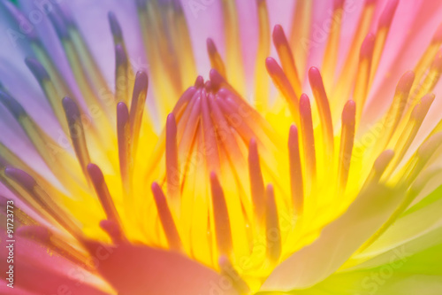 Lotus flower blur and soft background