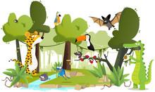 Les Animaux De La Forêt Tropicale
