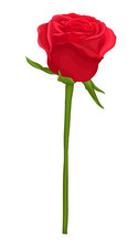 Beautiful Red Rose With Long S...