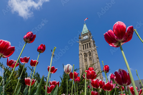 Photo Peace tower and tulips at Parliament Building  Ottawa Canada