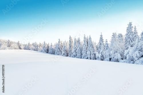 Fotobehang Wit Winter snowy landscape