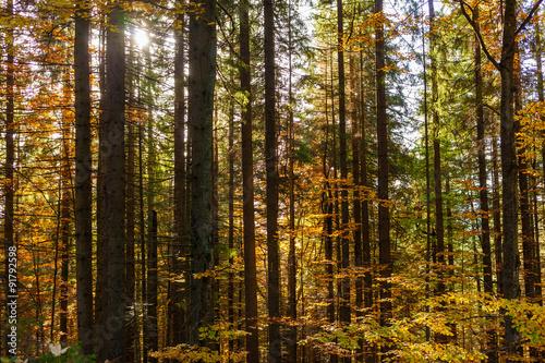 Foto op Plexiglas Landschappen Read and yellow autumn forest
