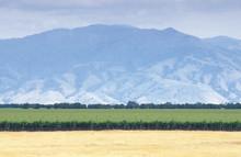 Crops, Farmland, And The Tehachapi Mountains California, Summer,
