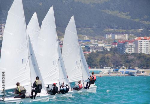 Garden Poster sailing regatta