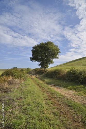 Valokuva  Viottolo di campagna
