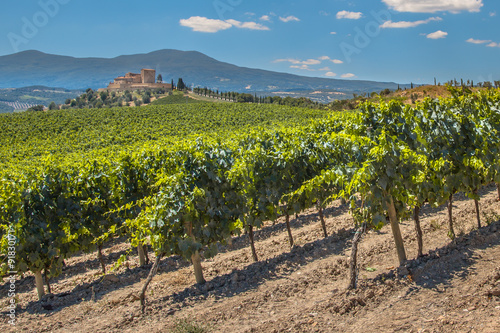 Vineyard in the hills