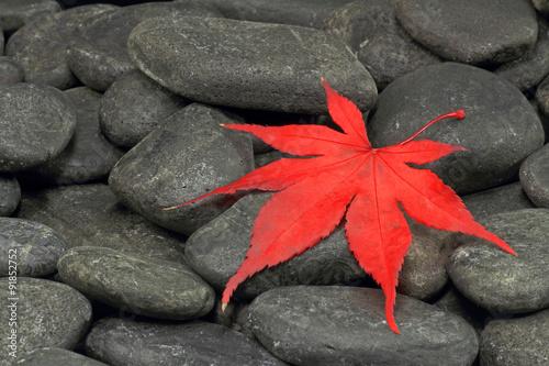 czerwony-lisc-klonu-na-czarnych-kamykach