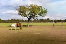 Landschaft Himmel Pferde