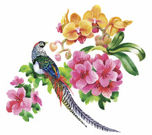 Garden Flowers And Pheasant Bi...