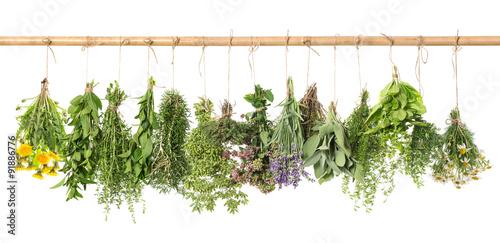 Fototapeta do kuchni Herbs hanging isolated on white. basil, rosemary, thyme, dandeli