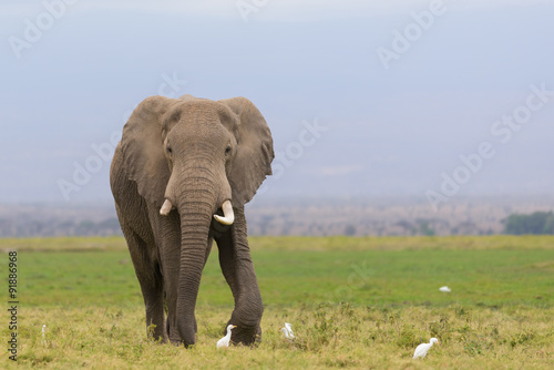 Fotobehang Olifant Male elephant / cloudy