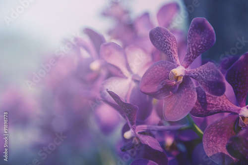 Violet orchid in the farm. Filter:cross process vintage effect. Canvas Print