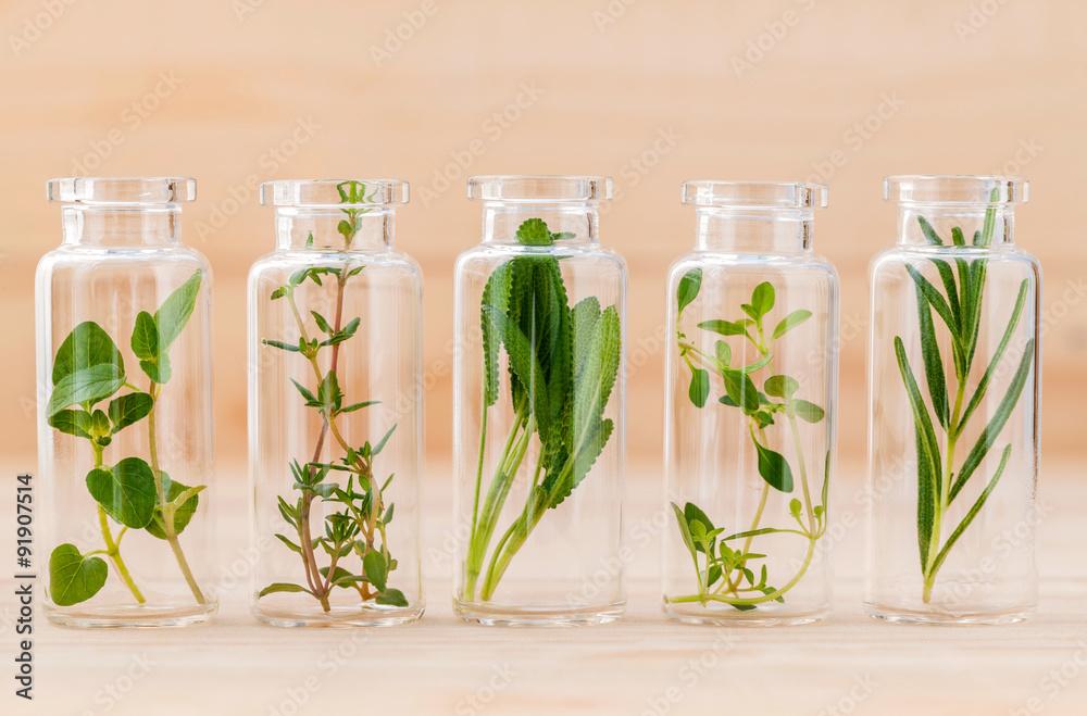 Fototapety, obrazy:  Bottle of essential oil lemon thyme ,thyme ,oregano,rosemary an