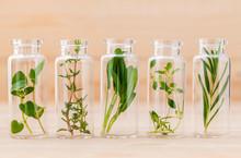 Bottle Of Essential Oil Lemon Thyme ,thyme ,oregano,rosemary An