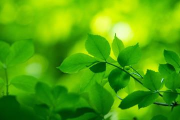 Fototapeta na wymiar fresh and green leaves