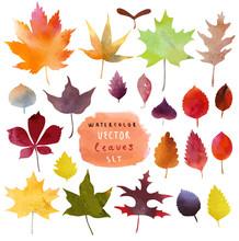 Leaves Set Watercolor Vector