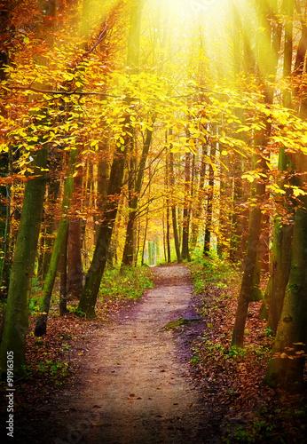 Foto op Canvas Herfst Waldweg im Licht - Way to forest in sunlight