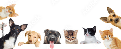 Collection of pet © Happy monkey