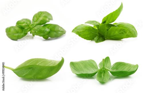 Fotografie, Obraz  foglie di basilico collage