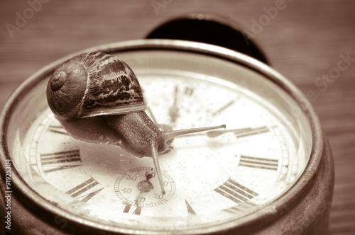 Fotografie, Obraz  land snail and clock, in sepia tone
