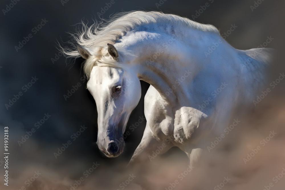 Fototapety, obrazy: Grey horse portrait on the black background