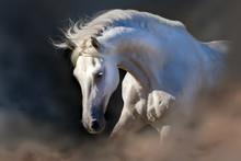 Grey Horse Portrait On The Black Background