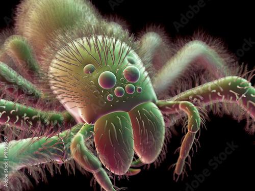 Obraz na plátně  SEM style illustration of a spider