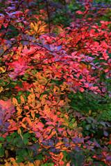 Fototapetaautumnal leaves texture