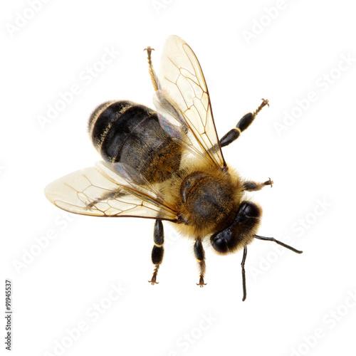 Poster Bee bee