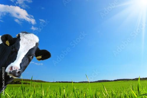 Foto  Mucca che guarda con uno sfondo di una prateria verde e un cielo azzurro