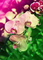 Fototapeta Storczyki purple orchid
