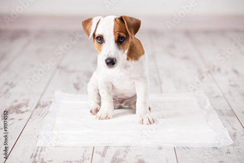 Canvas Print Puppy on absorbent litter