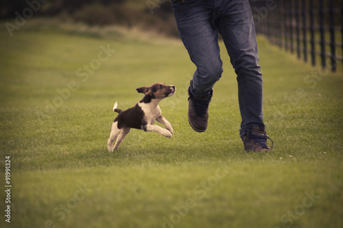 Poster Chien Playing with Beagle dog puppy