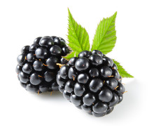 Blackberry With Leaf Isolated ...