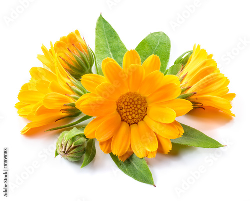 Foto op Aluminium Bloemenwinkel Calendula flower. Bouquet isolated on white background