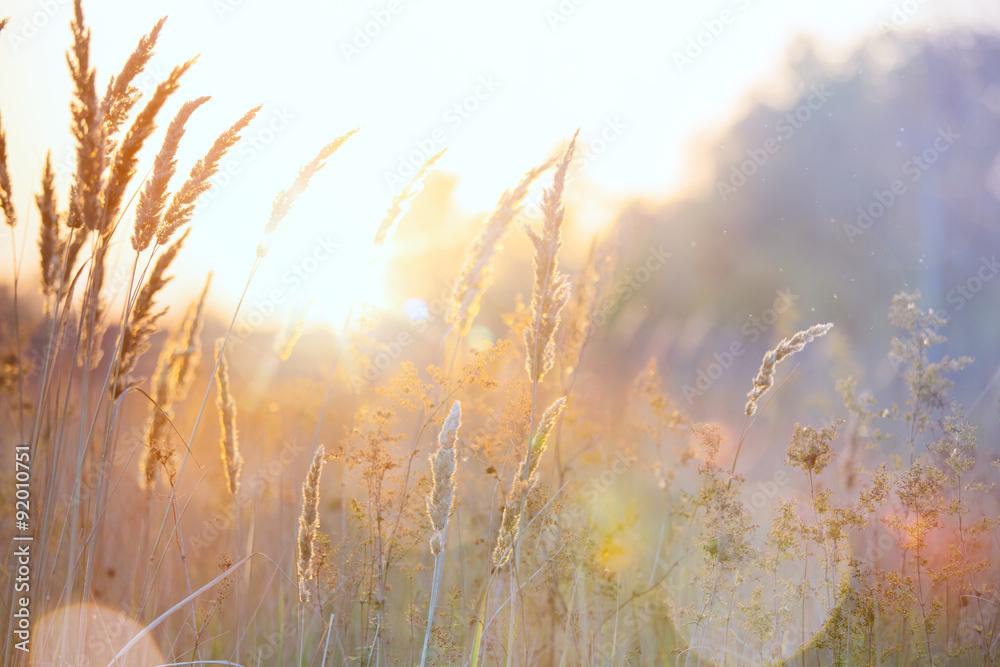 Fototapeta Art autumn sunny nature background