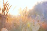 Fototapeta Nature - Art autumn sunny nature background