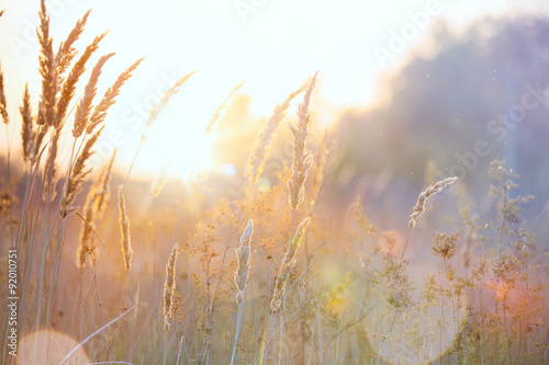 Deurstickers Natuur Art autumn sunny nature background