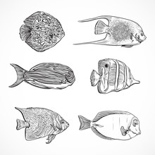 Collection Of Tropical Fish.Vi...
