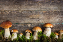 Food Background With Boletus Mushrooms And Moss