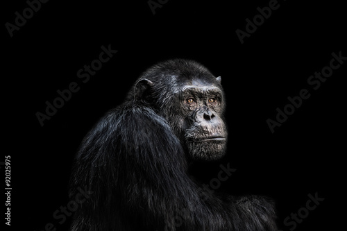 Photo Chimp
