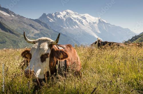Poster de jardin Vache vache dans les alpes