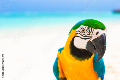 Foto op Canvas Papegaai Cute colorful parrot on tropical white sandy beach on Maldives