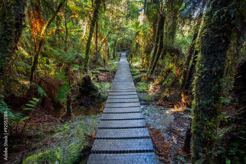 Aluminium Prints New Zealand walking path in mountain rain forest at matheson lake important
